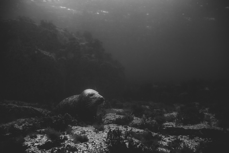The Farne Islands-091.jpg