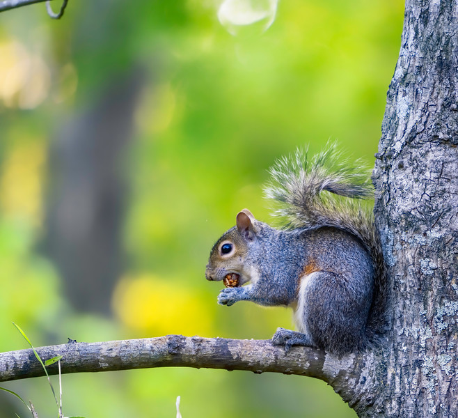 Squirrel (enhanced with Topaz AI)