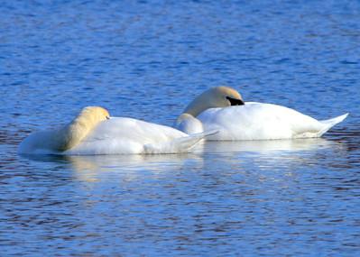 Staying Warm At Kiser Lake 12/30/2012