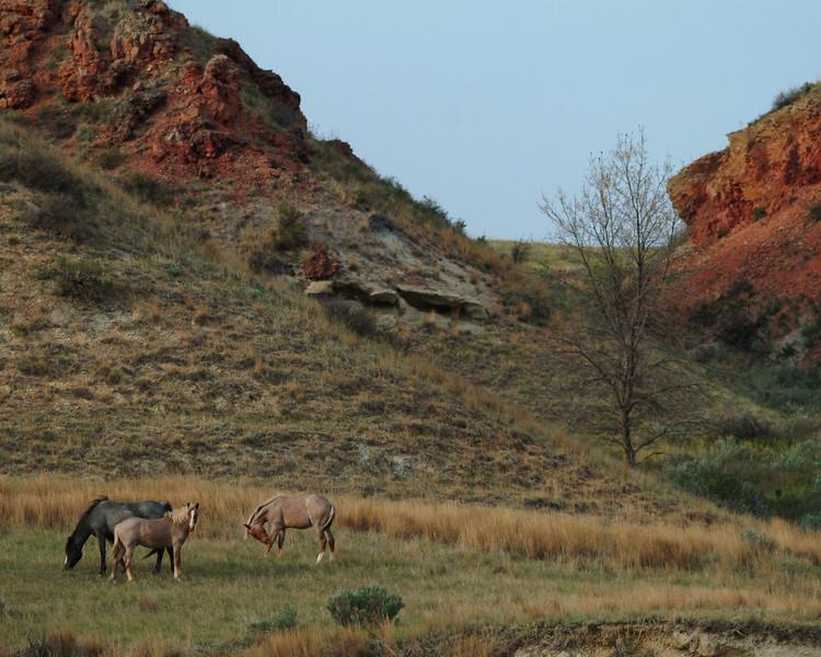 horses0590.jpg