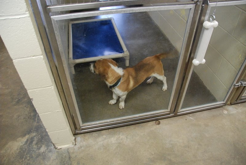 Kentucky Humane Society 2010 014.jpg