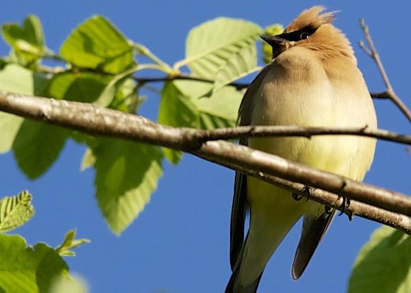 Bird Pics 4/19/13
