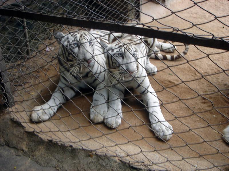 Hyderabad-2005-062.jpg