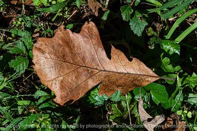 015-leaf_autumn-wdsm-23sep19-12x08-008-500-3414