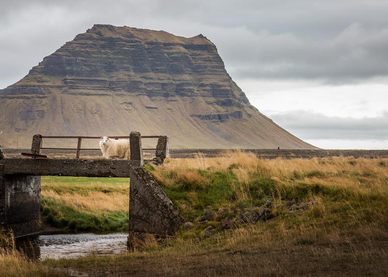 9690-Iceland-Paul-Hamill.jpg