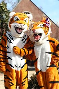 Tiger Love 2015