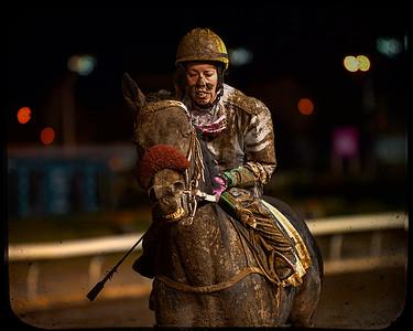 STOCK - Equine Sports