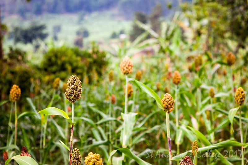 Uganda 17 (220 of 359).jpg