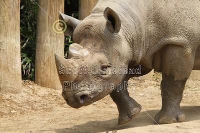 2011 Columbus Zoo (06-05-11)