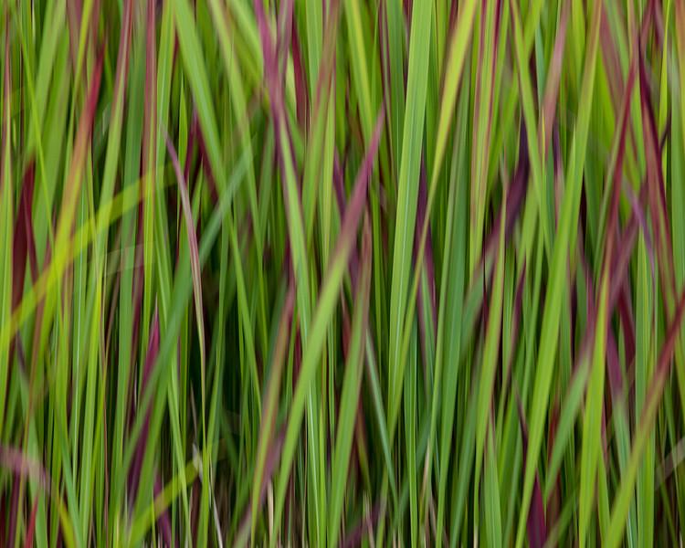 grass (long exposure)