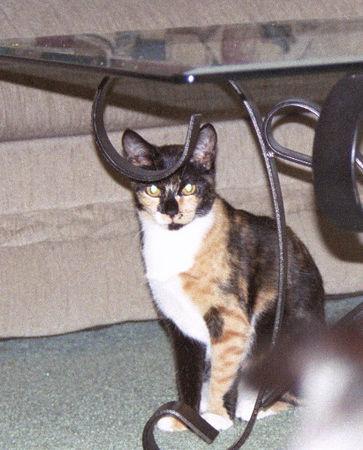 2003 12 - Cats 27.jpg