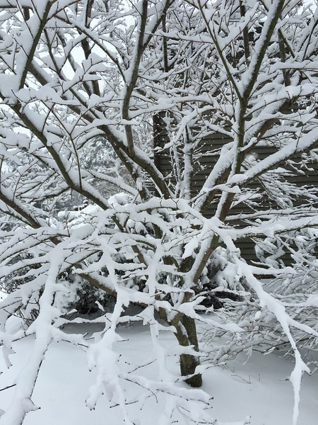 More pretty branch patterns