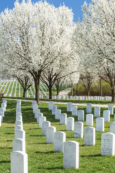 Spring Blooms JB Cemetery, St Louis 2