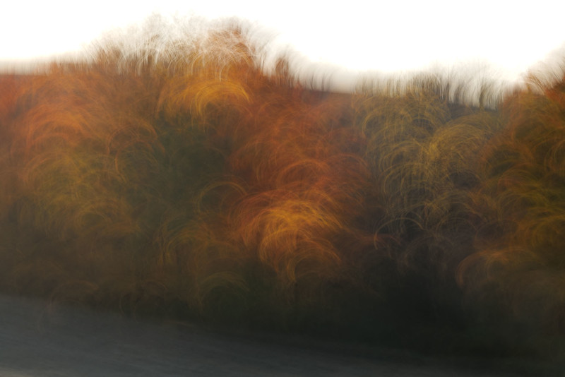 Autumn Leaves #01, October 2020