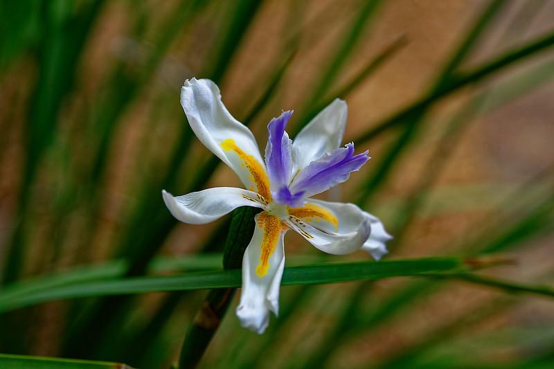 Sanibel Moorings Flowers
