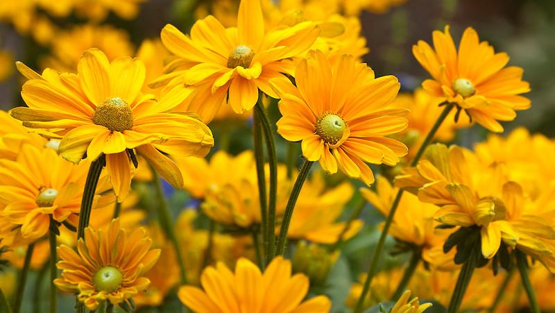 Botanicgarden12-0911.jpg