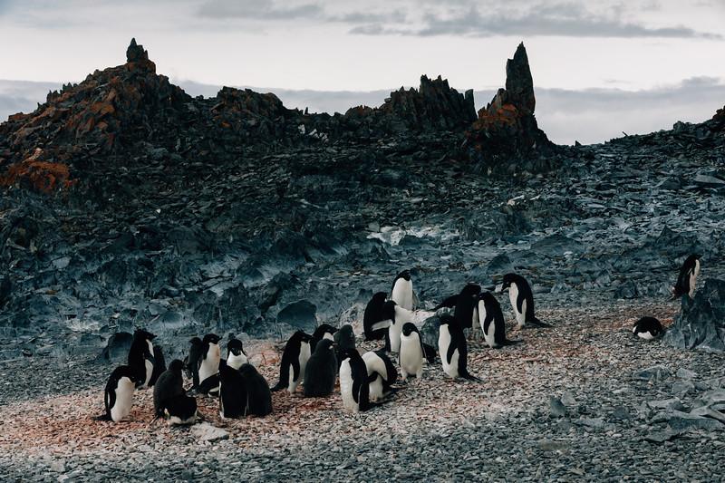 _MG_7010_20170122_Antarctica.jpg