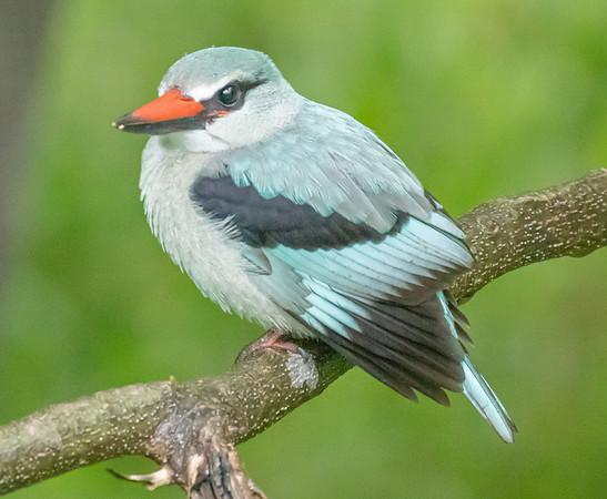 Safari Birds 2020