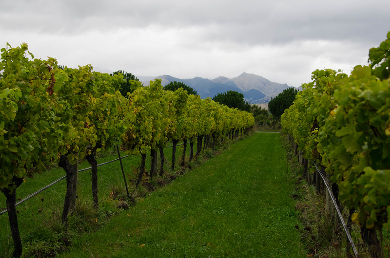 Marlborough Wine Region in Blenheim, New Zealand