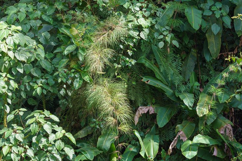 Costa Rica 2015-4101.jpg
