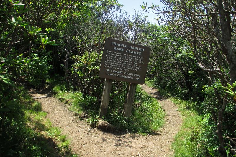 Craggy Pinnacle-Lower Overlook Spur Trail Junction
