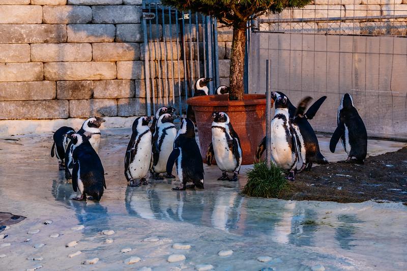 Tonis Zoo-0482.jpg