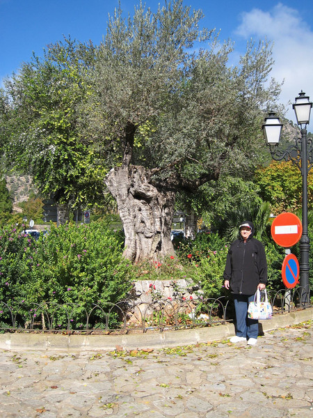 Valldemosa, Spain - Me and an Olive Tree