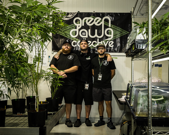 GREEN DAWG COLLECTIVE