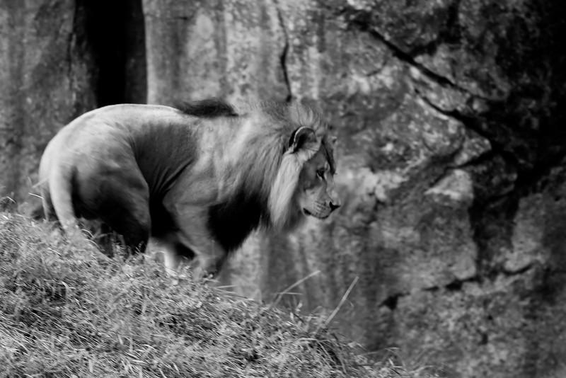 NC Zoo_51011992.jpg