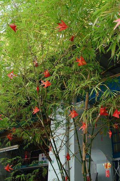 Oragami in a Tree.jpg