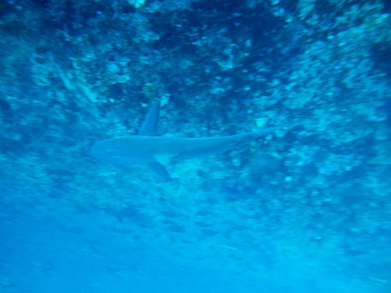 underwater-105.jpg