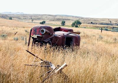 Lillian's Boneyard - In the Grass