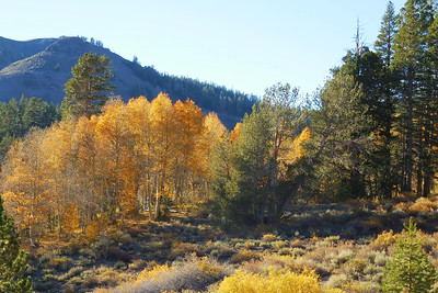 Sonora Pass Fall 2014
