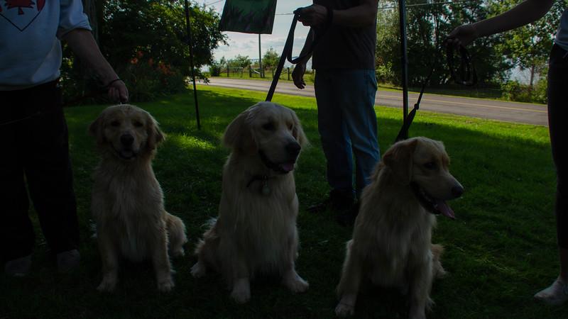 PuppyParty18-591.jpg