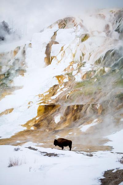20170104-Yellowstone.jpg