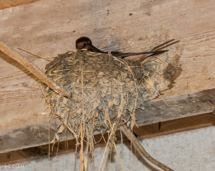 Adding to the nest
