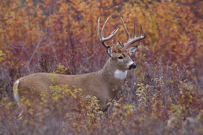 I.D., documentation, Bucks of 2011: B.R.