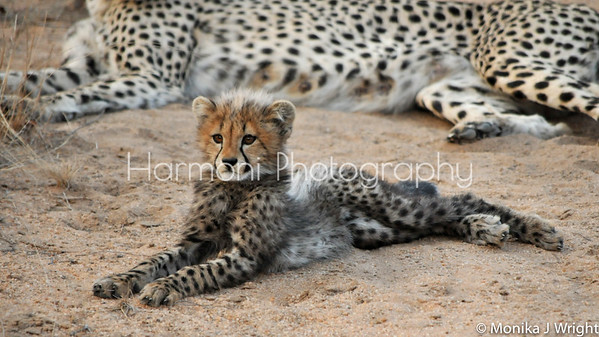 Harmoni Photography - Out of Africa