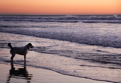 Dog Beach - January 2012