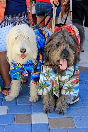 Surf City Surf Dog Costume Contest 9/28/13