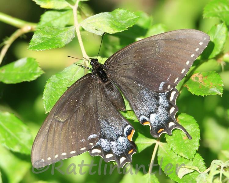 Butterfly051112_001.jpg