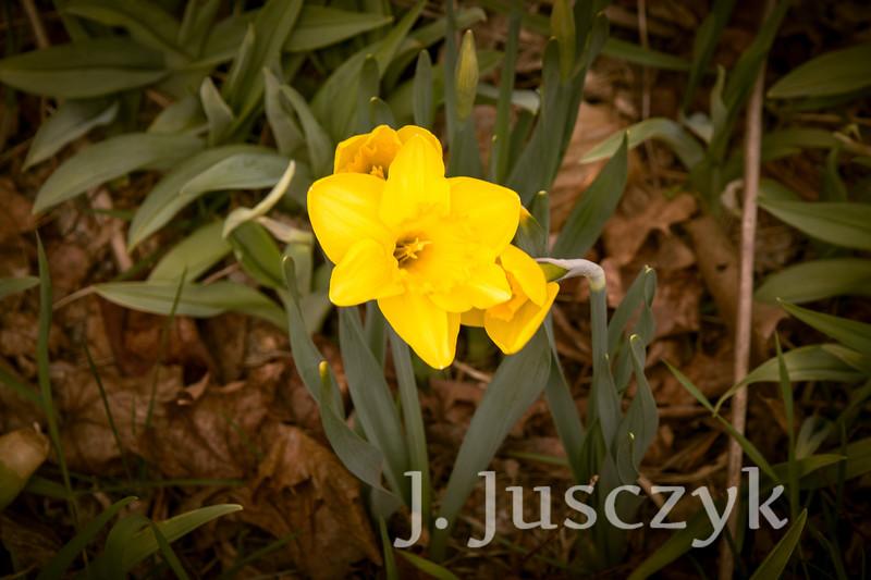 Jusczyk2021-6142.jpg
