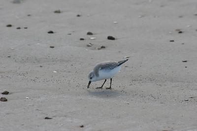 Texas Beach 12-21-2007