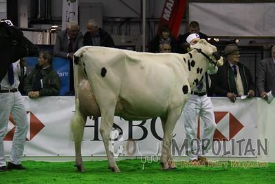 Agriscot Holstein 2014