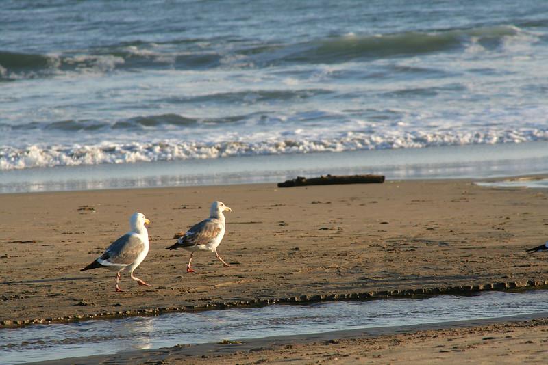 3944 Gulls.jpg
