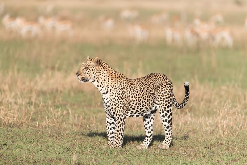 Africa - 101616 - 5146.jpg