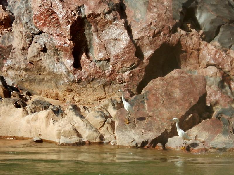 Grand Canyon Rafting Jun 2014 346.jpg