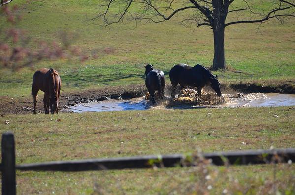 Horse scenes
