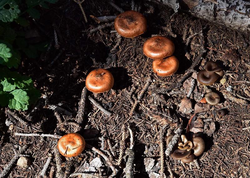 NEA_0357-7x5-Mushrooms.jpg