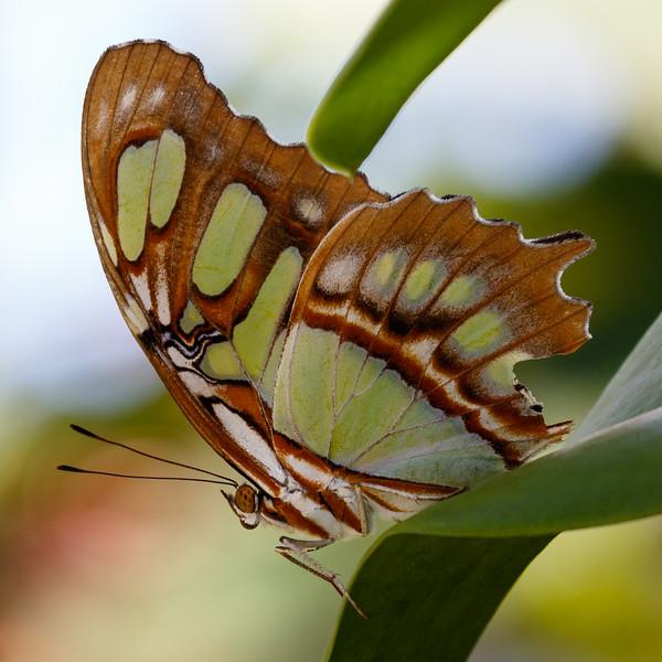 Butterfly World-7650.jpg
